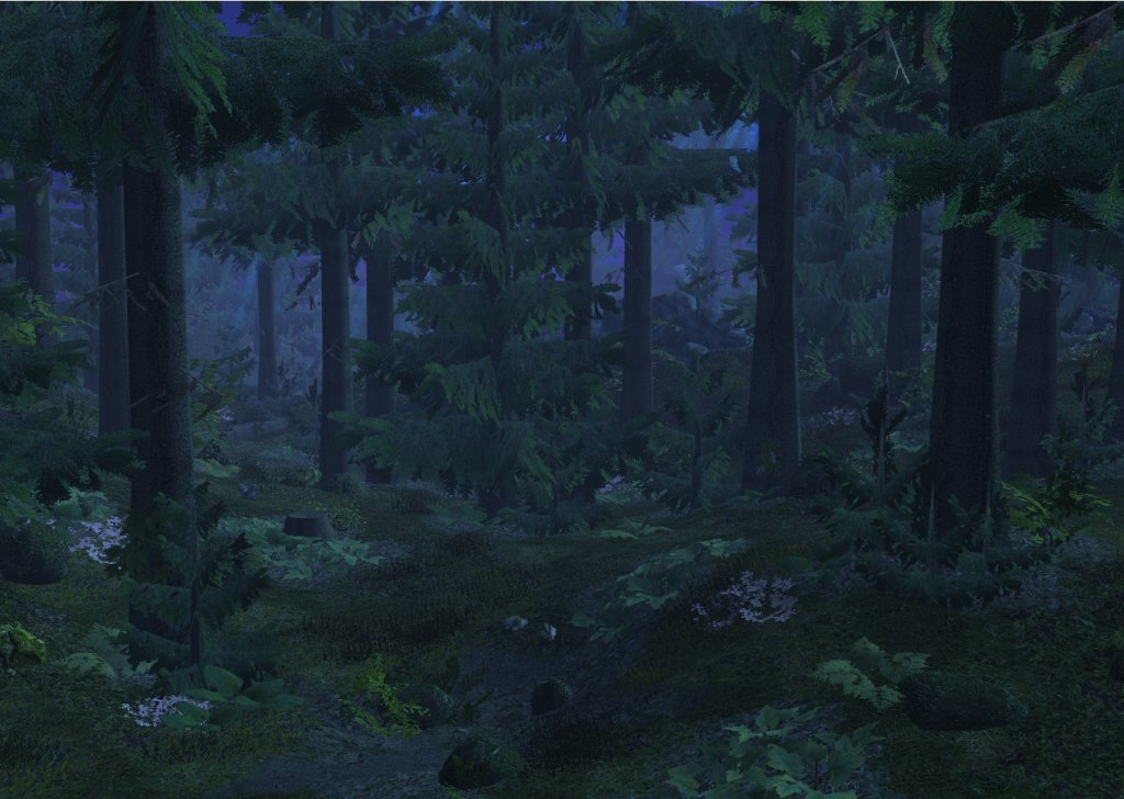 The Peaceful Lull Of A Forest Night Audio Atmosphere