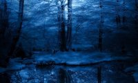 Nighttime in a Winter Forest