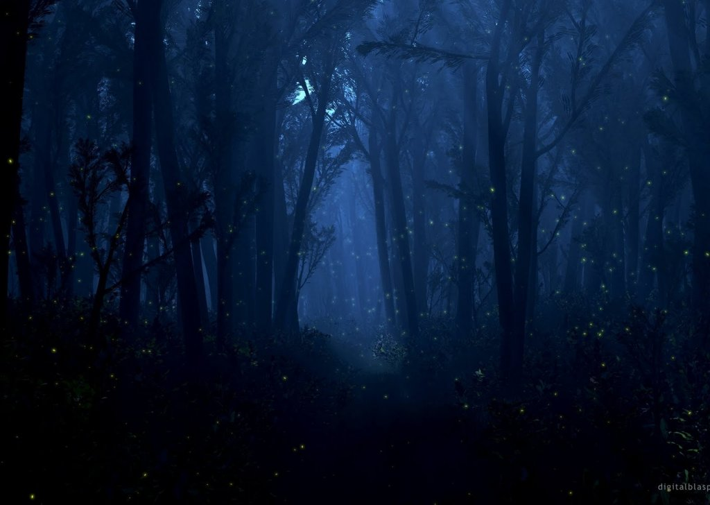 night forest rain audio atmosphere