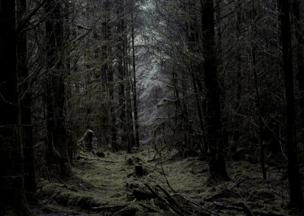 Gothic Forrest Ambience audio atmosphere