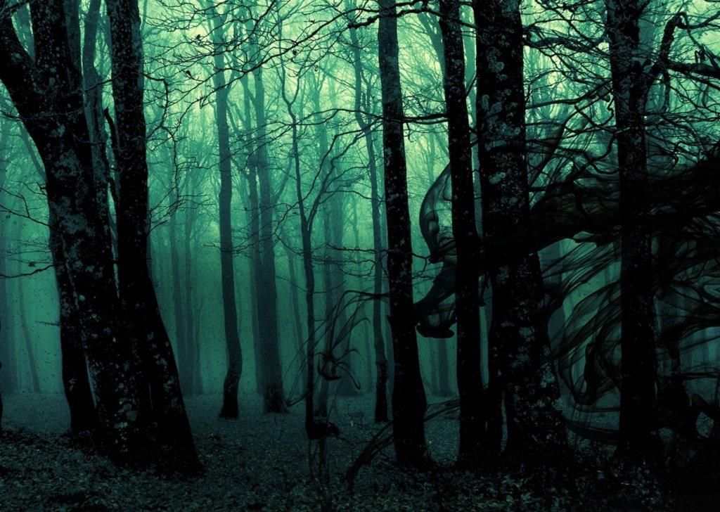 lost in a dark fantasy forest audio atmosphere