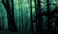 Lost in a dark fantasy forest